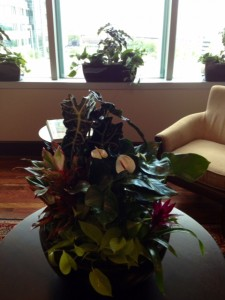 Indoor Plant on Table